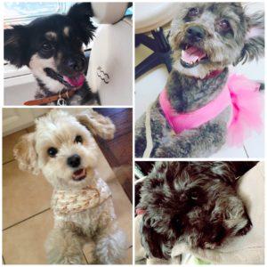 Ivana's puppies